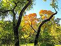 Botanička bašta Jevremovac, Beograd - jesenje boje, svetlost i senke 07.jpg