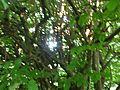 Botanični vrt (3990915114).jpg