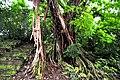 Botanic garden limbe95.jpg