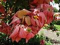 Botanical Garden of Peradeniya 41.JPG