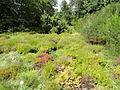 Botanischer Garten, Frankfurt am Main - DSC02605.JPG