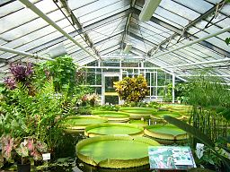 Botanischer Garten BS.Seerosen