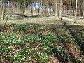 Botanischer Garten Ulm Hutewald.JPG