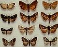 British journal of entomology and natural history (1995) (20230565048).jpg