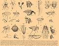 Brockhaus and Efron Encyclopedic Dictionary b7 096-0.jpg
