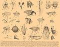 Brockhaus and Efron Encyclopedic Dictionary b7 096-0.jpg