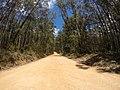 Brooman NSW 2538, Australia - panoramio (104).jpg