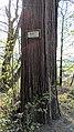 Buchenbach Baum 20190418 174204.jpg