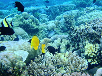 Protected areas of Indonesia - Bunaken National Park in the Coral Triangle, one of Indonesia's over 100 marine protected areas