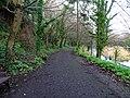 Bushy Park, Dublin -146491 (45565181185).jpg