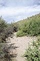 Butcher Jones Trail to Pinter's Point Loop, Tonto National Park, Saguaro Lake, Ft. McDowell, AZ - panoramio (179).jpg