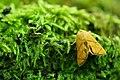 Butterfly1 mz.jpg