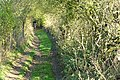 Byway to East Ilsley - geograph.org.uk - 1591944.jpg