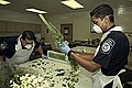 CBP agriculture specialists doing lab work.jpg