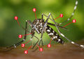 CDC-Gathany-Aedes-albopictus-1 tagged.png