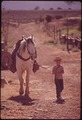 CHILD WITH HORSE ON RANCH - NARA - 543783.tif