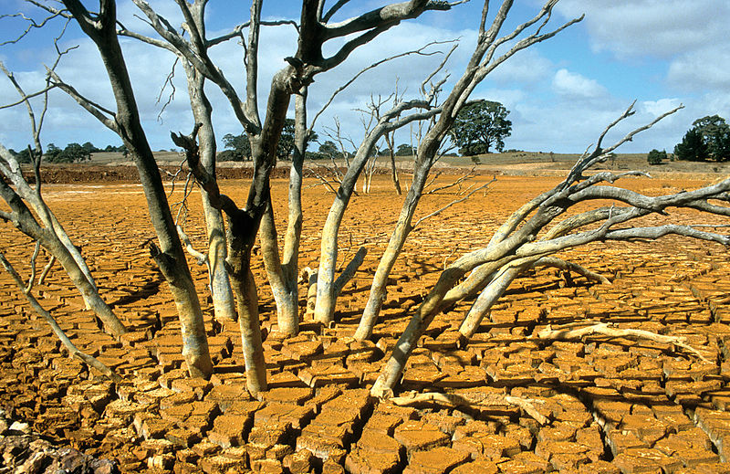 File:CSIRO ScienceImage 4507 Dry bed of the tailings dam at the Brukunga Pyrite Mine east of Adelaide in the Mount Lofty Ranges South Australia 1992.jpg
