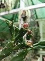 Cactus20170706 152515.jpg