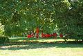 Caledon State Park (7753051196).jpg