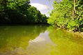 Calfkiller-river-above-sparta-tn1.jpg