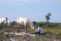 Camargue naturally approached 2.JPG