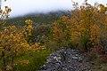 Camino - panoramio (28).jpg