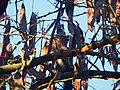 Camouflage coloration and shape , Камуфлажа на верверица.JPG