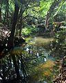 Camp Creek near end of Reservoir Drive, Wynyard, Tasmania.jpg