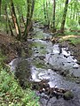 Cannop Brook near the Beaver Lodge - Sept 2011 - panoramio.jpg