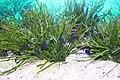 Capetown - Two Oceans Aquarium IMG 9449.JPG