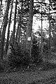 Captain Duve's place of a grave - panoramio - Laima Gūtmane (simka….jpg