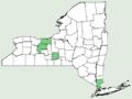 Carex laxiculmis var copulata NY-dist-map.png