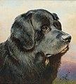 Carl Reichert - A Newfoundland Dog.jpg