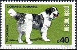 Carpathian-Shepherd-Canis-lupus-familiaris Romania 1981.jpg