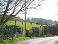 Cattle in a roadside field north of Rhiwlas - geograph.org.uk - 959320.jpg