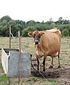 Cattle watering trough - geograph.org.uk - 1493175.jpg