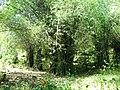 Chulannur Peafowl Sanctuary - panoramio (6).jpg