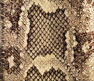 Snakeskin - Close-up of a patterned beige and brown snake skin used to make a cigarette case
