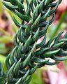 Closeup greenery.jpg