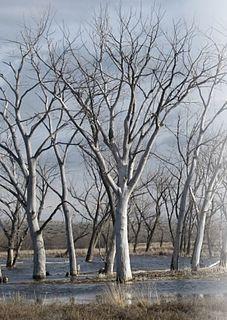 Cold Springs National Wildlife Refuge
