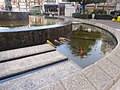 Colorful carps in fountain of Osu Park - 1.jpg