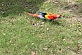 Colourful Parrot.jpg