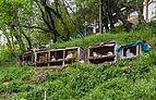 Conejos en Ohrid, Macedonia, 2014-04-17, DD 27.JPG