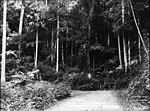 Cordeaux Road, Illawarra (2469675610).jpg