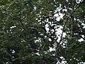 CostaRica (6108738280).jpg