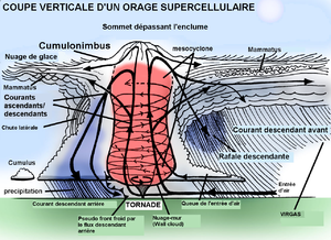300px-Coupe_Supercellule.PNG