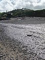 Crackington Haven, the river trickles out to sea - geograph.org.uk - 1466136.jpg
