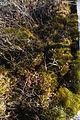 Cranesville Swamp Preserve 79.JPG