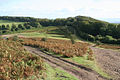 Crowcombe, Crowcombe Common - geograph.org.uk - 60025.jpg