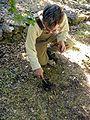 Cueillette d'une truffe à Mons.jpg